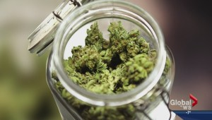 Medical marijuana risks may outweigh benefits